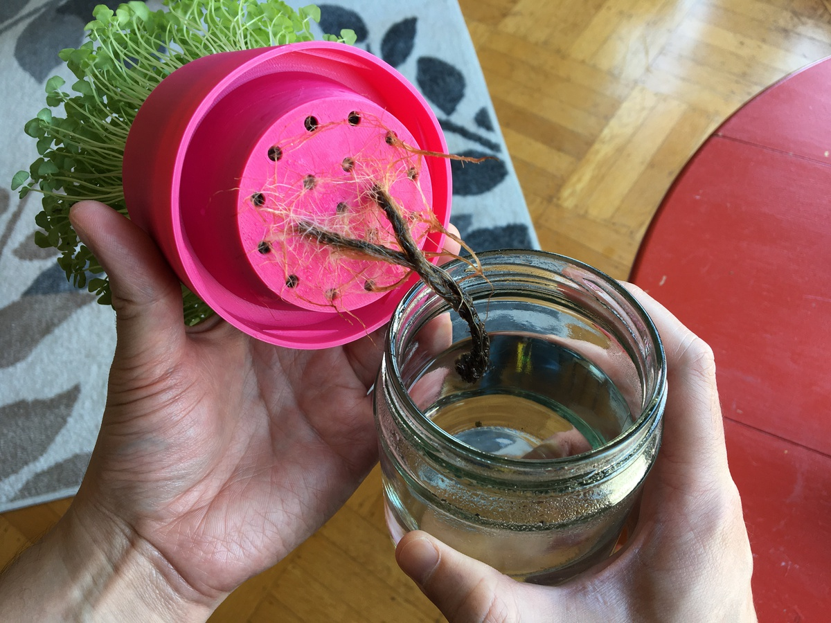 Capillary action in action